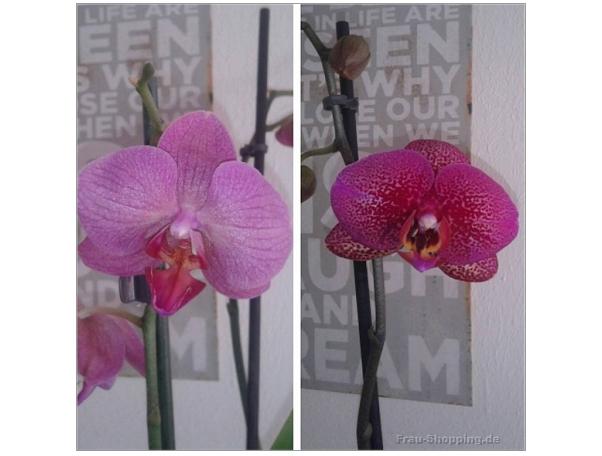 Orchideen von der Resterampe
