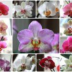 Ein Teil meiner Orchideen