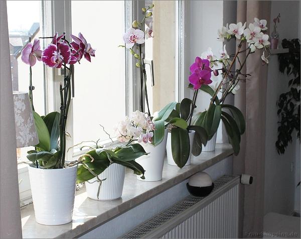orchidee wachst schief